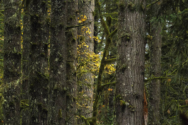 Photograph - In The Woods No. 2 by Belinda Greb