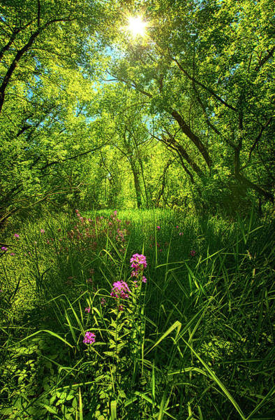 Photograph - In The Woods by Phil Koch