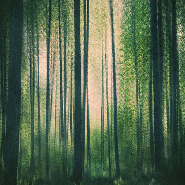 Wall Art - Photograph - In The Woods Square by Violet Gray