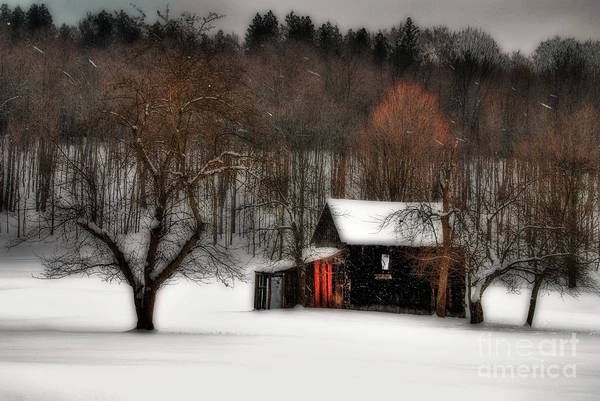 Photograph - In Winter by Lois Bryan