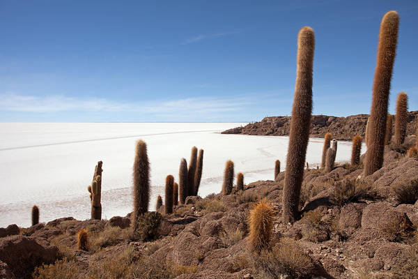 Photograph - Incahuasi Island View With Giant Cacti And Salt Lake by Aivar Mikko