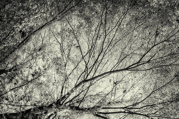 Photograph - Incandescence Bw Ambro by Belinda Greb