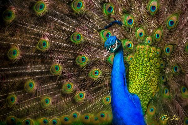 Photograph - India Blue by Rikk Flohr