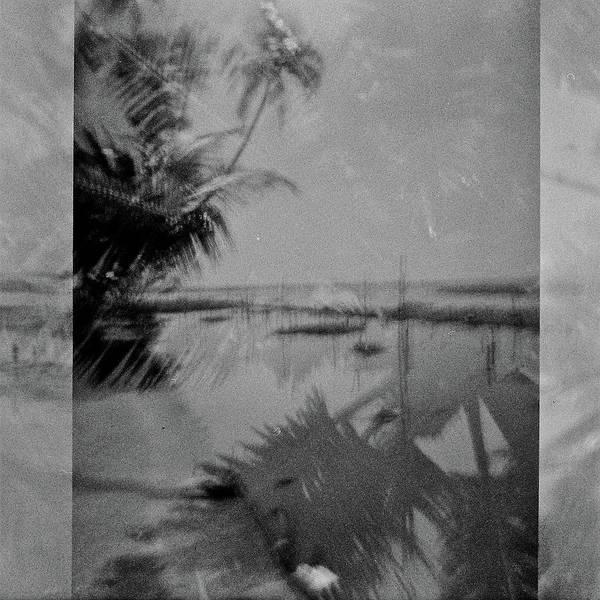 Wall Art - Photograph - India Palm Trees 2 by Rika Maja Duevel