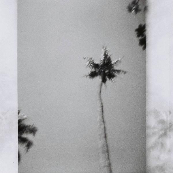 Wall Art - Photograph - India Palm Trees 7 by Rika Maja Duevel