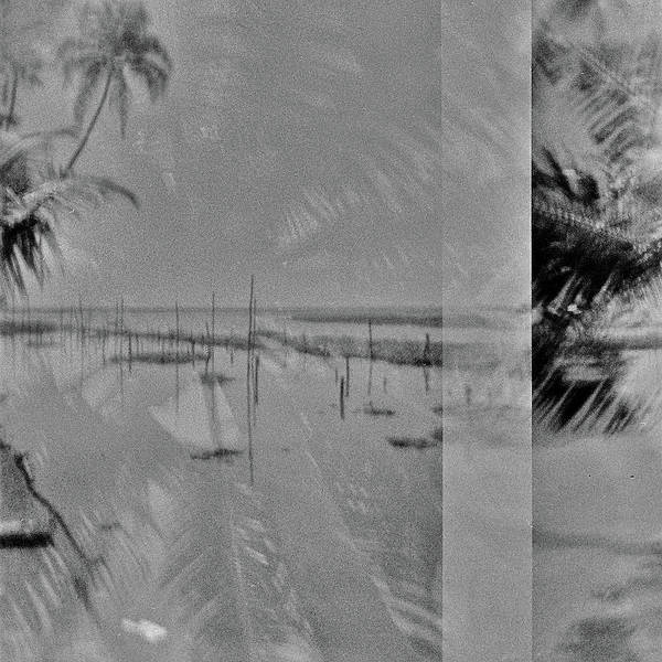 Wall Art - Photograph - India Palm Trees by Rika Maja Duevel