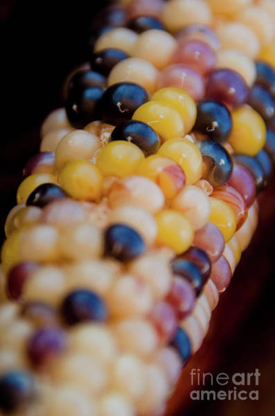 Photograph - Indian Corn 3 by Andrea Anderegg