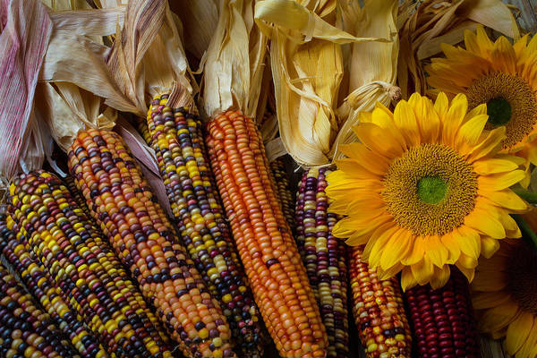 Indian Corn Photograph - Indian Corn And Sunflowers by Garry Gay