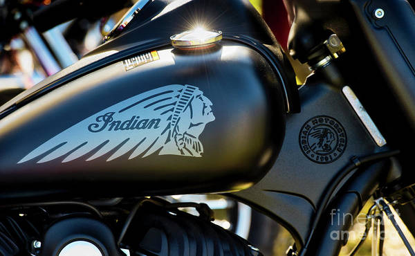 Photograph - Indian Dark Horse by Tim Gainey