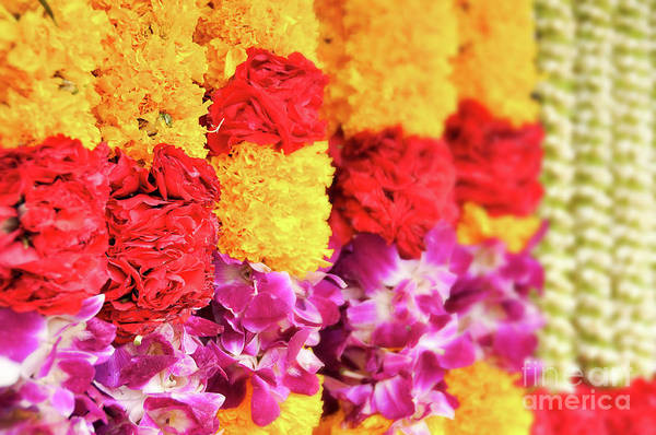 Wall Art - Photograph - Indian Flower Garland by Delphimages Photo Creations