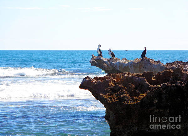Indian Ocean Birds Resting On Rocks Art Print