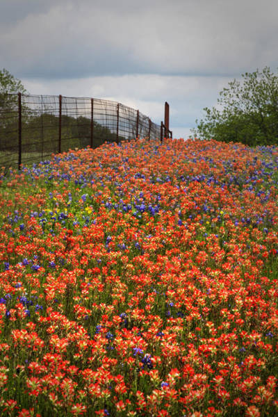 Texas Bluebonnet Photograph - Indian Painbrushes Galore by David and Carol Kelly