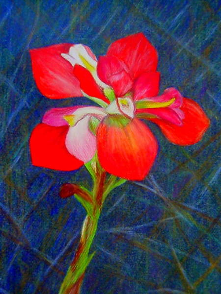 Drawing - Indian Paintbrush by Beth Akerman