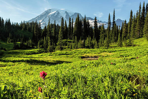 Photograph - Indian Paintbrush In An Alpine Meadow by Belinda Greb