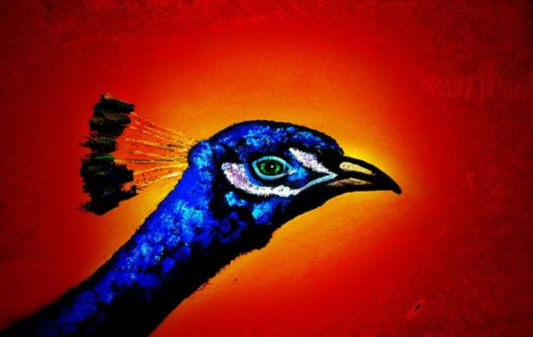 Textura Wall Art - Photograph - Indian Peacock  by Toni Fontana