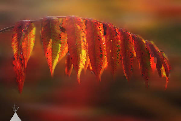 Photograph - Indian Summer by Wayne King