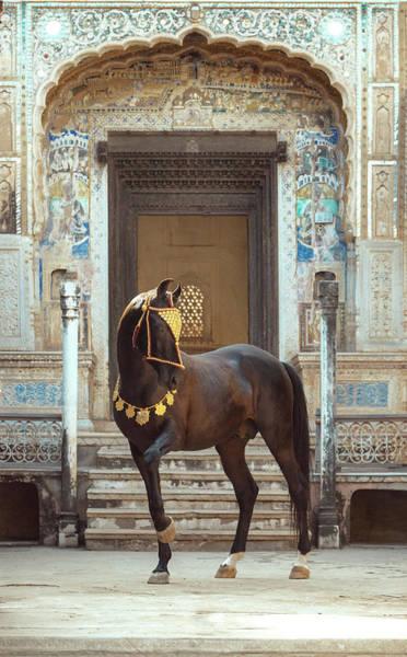 Photograph - Indian Treasure by Ekaterina Druz