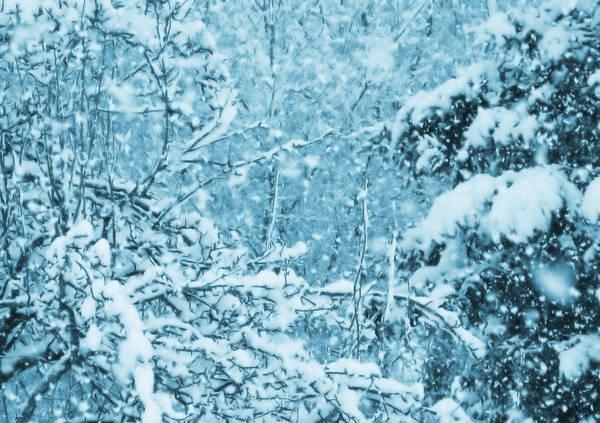 Photograph - Indigo Blue Snowfall by Mary Wolf