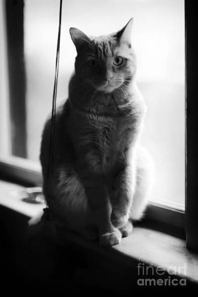 Photograph - Indoor Cat by Patrick M Lynch