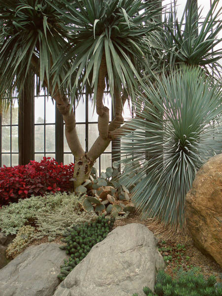 Longwood Gardens Photograph - Indoor Garden by Gordon Beck