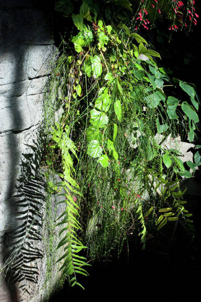Wall Art - Photograph - Indoor Green Plants by Catherine Lau