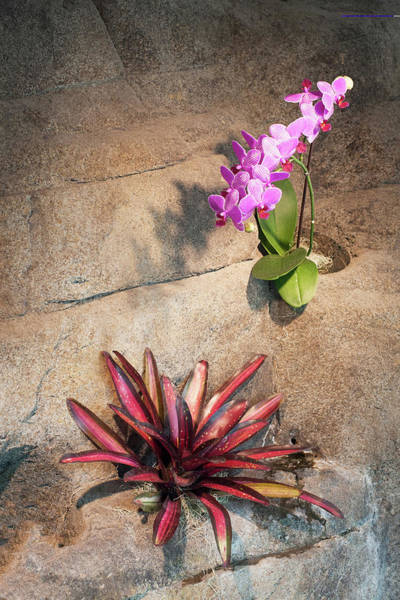 Wall Art - Photograph - Indoor Plants  by Catherine Lau