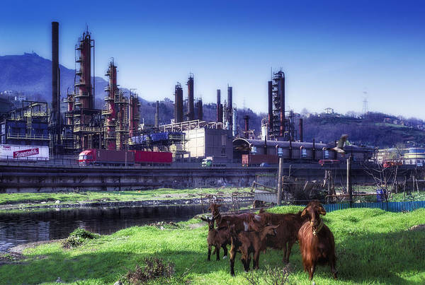 Photograph - Industrial Archeology Refinery Plant With Goats by Enrico Pelos