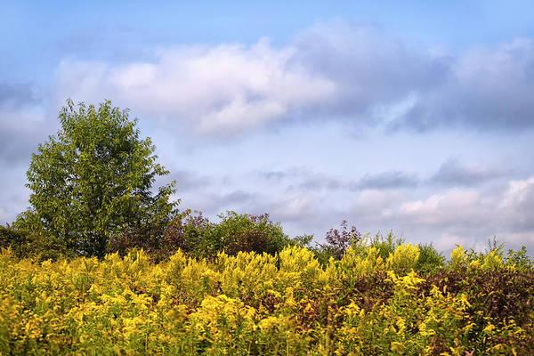 Photograph - Infinite Gold Sunlight Landscape by Christina Rollo