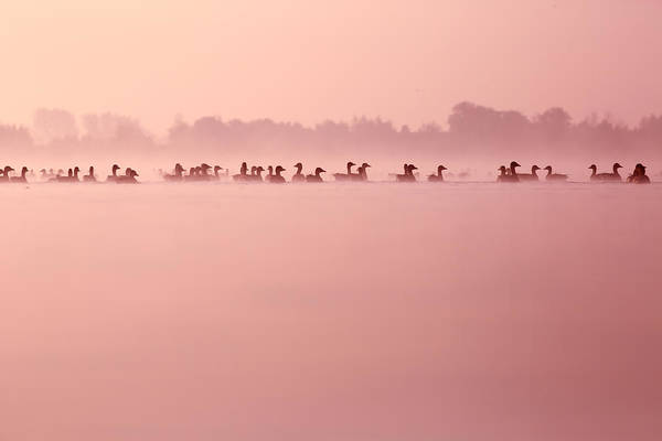 Wall Art - Photograph - Infinity - Geese In The Mist by Roeselien Raimond