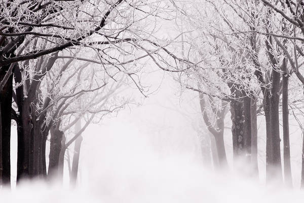 Wall Art - Photograph - Infinity - Trees Covered With Hoar Frost On A Snowy Winter Day by Roeselien Raimond