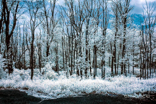 Photograph - Infrared Dream by Anthony Sacco