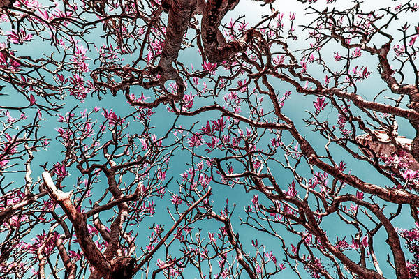 Natural Light Photograph - Infrared Frangipani Tree by Stelios Kleanthous