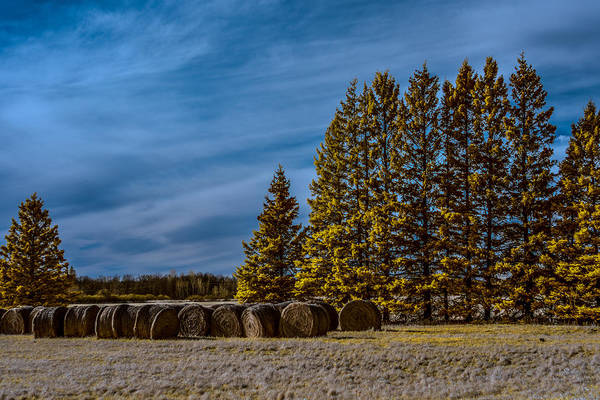 Wall Art - Photograph - Infrared Hay Bales by Paul Freidlund