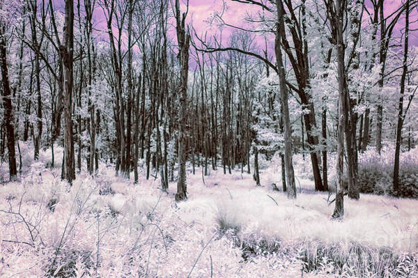 Photograph - Infrared Magenta by Anthony Sacco