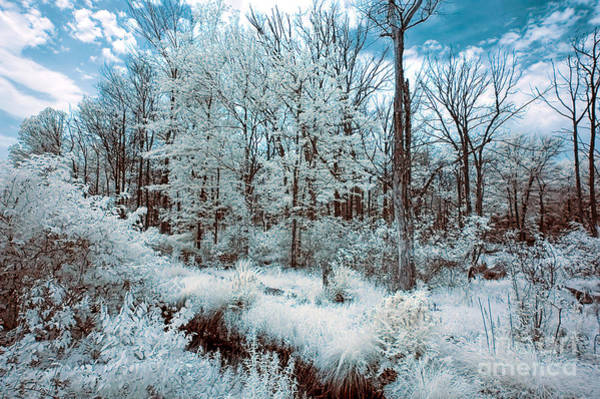Photograph - Infrared Mirage by Anthony Sacco