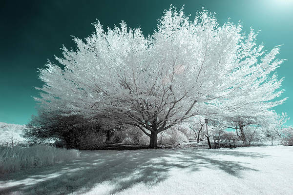 Photograph - Infrared Tree Blue by Brian Hale