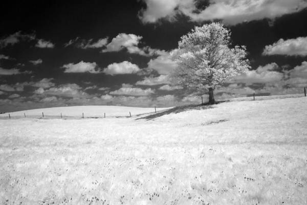 Photograph - Infrared Tree by Dick Pratt