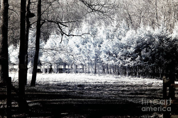 Photograph - Infrared Tree Light by John Rizzuto