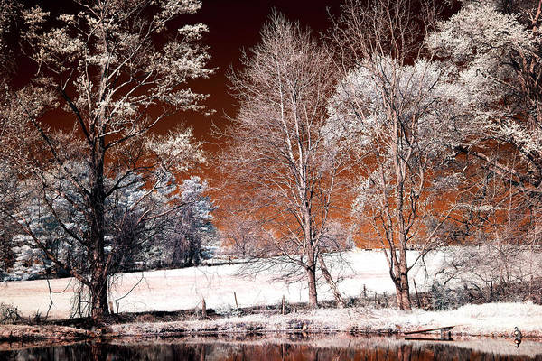 Photograph - Infrared Trees Along The Pond by John Rizzuto