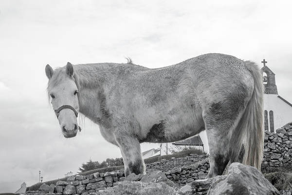 Grey Horse Photograph - Inis Mor Old Spirit by Betsy Knapp