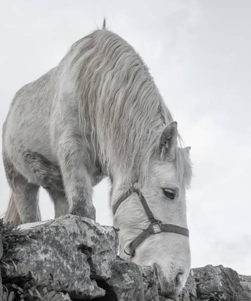 Grey Horse Photograph - Inis Mor Tranquil Moments by Betsy Knapp