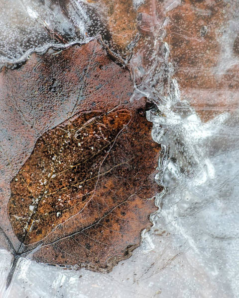 Inner Photograph - Inner Leaf by Susan Capuano