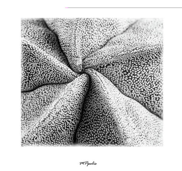 Wall Art - Photograph - Inner Plant Details by Michalakis Ppalis