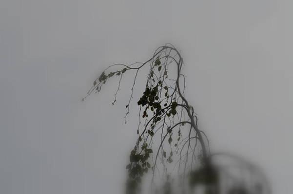 Innner  Mist Art Print