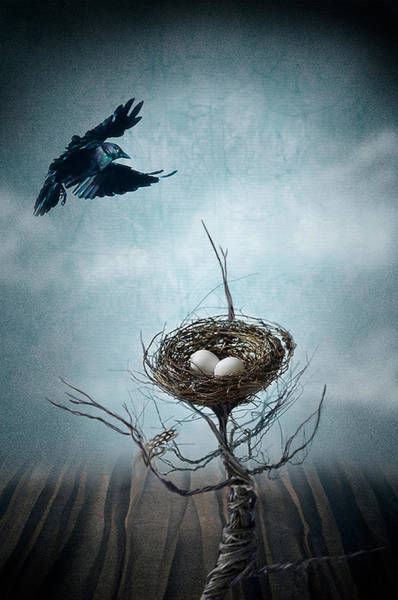 Birds Eggs Photograph - Innocence by Maggie Terlecki