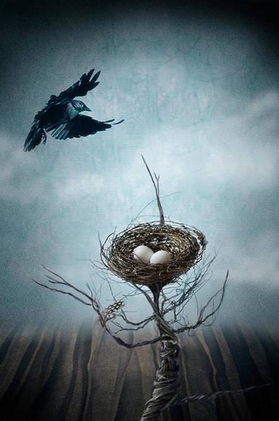 Crows Nest Wall Art - Photograph - Innocence by Maggie Terlecki