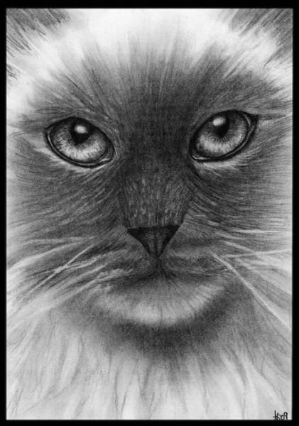 Wall Art - Drawing - Innocent Feline by Alycia Ryan