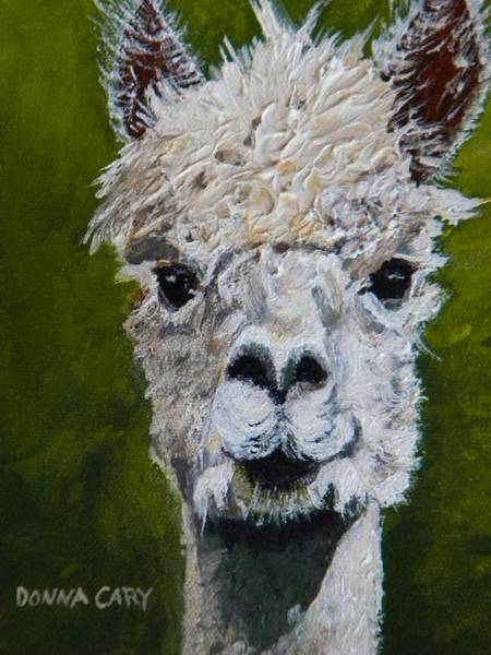 Alpaca Painting - Inquisitive Alpaca by Donna Cary