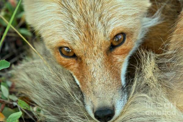 Photograph - Inquisitive Eyes by Adam Jewell