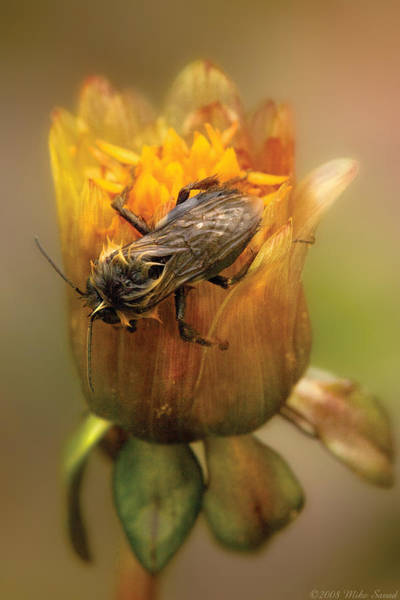Photograph - Insect - Bee - Dare To Bee Different by Mike Savad